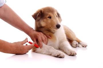 Entfernen von Zecken beim Hund