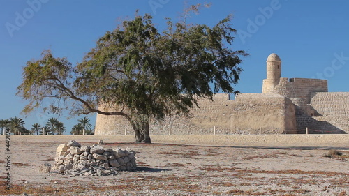 lonely tree of Qal'at al-Bahrain fort