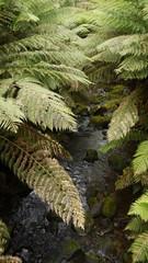 Australiens Feuchtgebiete