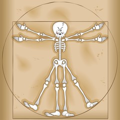 Vitruvian Skeleton Man-Uomo Scheletro Vitruviano-Vector