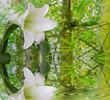 Heilung aus der Natur - Lilie