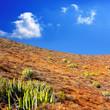 Arona Cactus mountain in Tenerife south