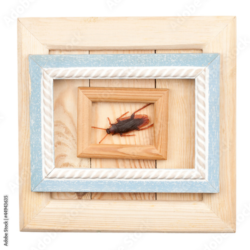Old wooden frames and fake cockroach