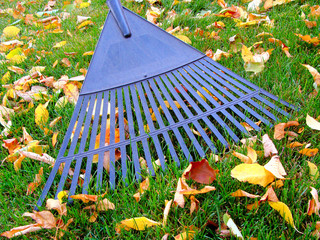 Raking autumn leaves