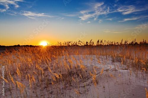 Fototapeten,sand,ocolus,steppe,prärie