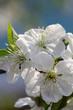 Fototapeten,ackerbau,blühen,blühen,erbluhen