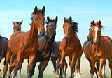 Fototapety Horse
