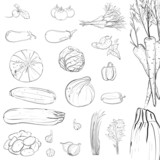 Fresh Vegetables Sketch Collection