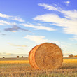 Hay roll, blue sky and field at sunset. Tuscany
