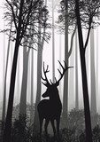 Fototapeta natura - dziki - Dziki Ssak
