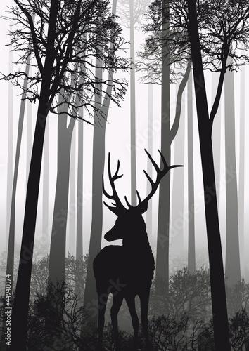 Fototapeten,rehbock,jagen,natur,savage