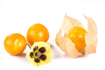 Physalis fruit with blossom