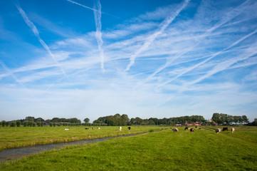 Dutch fields