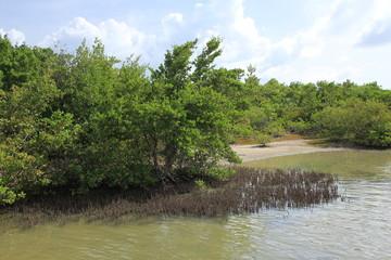 Nature - Mangrove