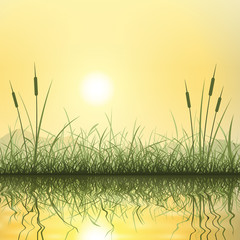 Grass and Reeds with Reflection in Water