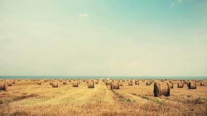 Wheat field 02