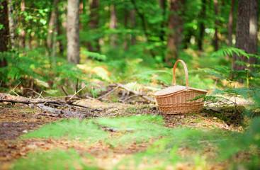 Wicker basket in a forest