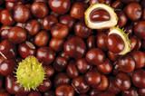 Fototapety chestnuts