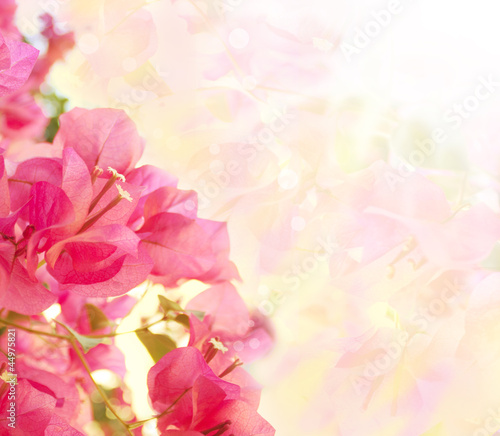 Beautiful abstract floral background with pink flowers. Border d