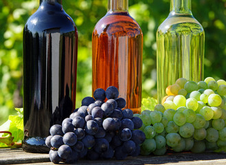 Wein Sorten - Wine