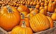 Autumn / Halloween 8