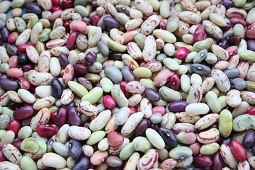 Natural,colorful bean  seeds in harvest time