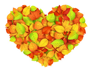 Big autumn heart. Vector