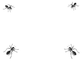 3d black ant