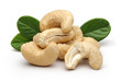 Cashew and leaves