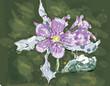 Jasmin flower watercolor, eps 10