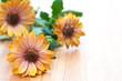 Drei Ringelblumen, Calendula