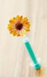 Ringelblume auf eine Spritze aufgespießt, Calendula