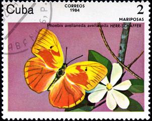 Phoebis Avellaneda