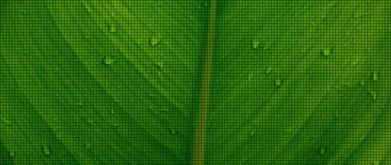 hintergrund pflanze