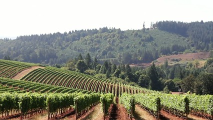 Winery Vineyard on Rolling Hills in Oregon