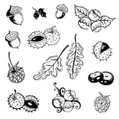 Herbst, Blätter, Laub, Ranke, flora, vector set