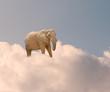 Elephant On Cloud In Sky