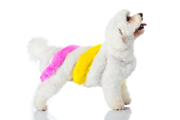 Adorable dog on white