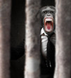 Annoyed Monkey Behind Bars
