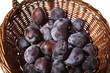 Pflaumen - frische Ernte in Weidenkorb