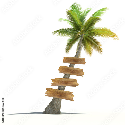 Palm tree with wooden signs