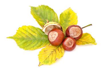 Autumn's chestnuts