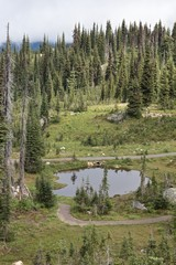 Little pond on Mount Revelstoke