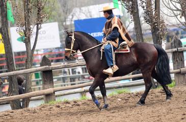 huaso cileno a cavallo