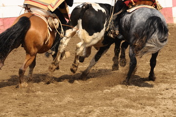 rodeo - rodeo de criaderos