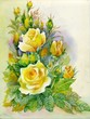Watercolor Flower Collection: Roses