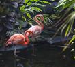 goose stepping flamingo's