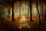 Fototapete Baum - Herbst - Wald
