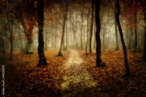 Fototapeta drzewo - jesień - Las