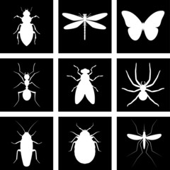 icons insects